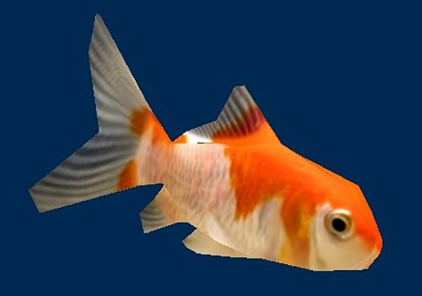 comet_goldfish.zip