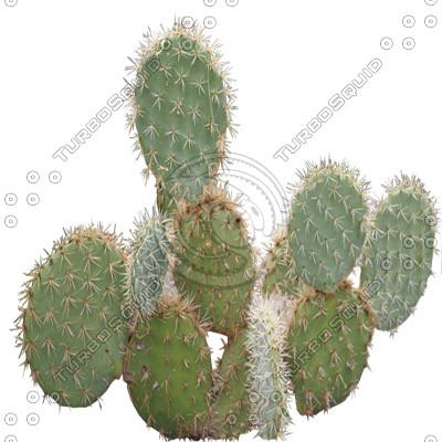 Desert_plants_21.tga
