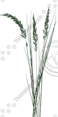 Grass_22.tga