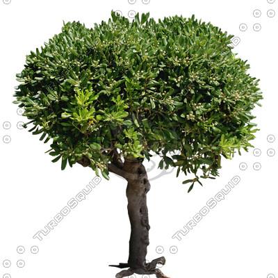 Tree_N_01.tga