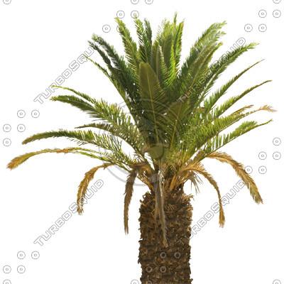 Palm_17.tga