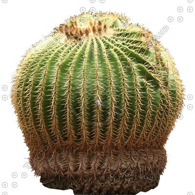 Desert_plants_04.tga