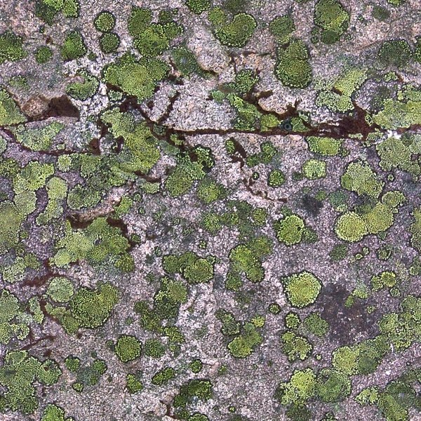 RS006 mossy red granite rock texture