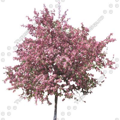 TreeL_Blomst_02.tga