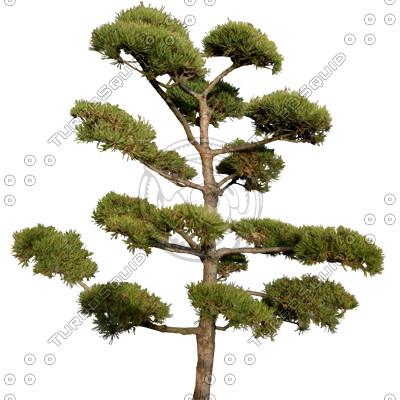 Tree_N_11.tga