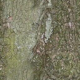 UPTBRK06 tree bark texture