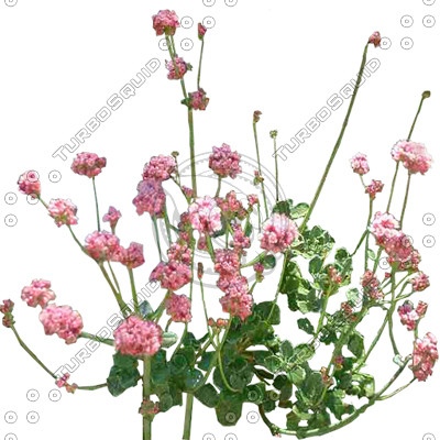 FlowerL_06.tga