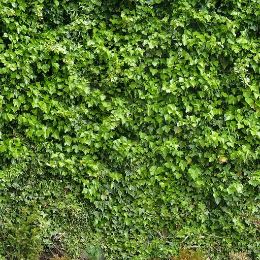 W291 ivy covered wall texture