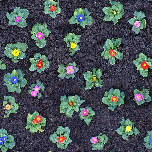 G148 garden flowers soil