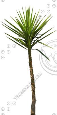 Palm_N_02.tga
