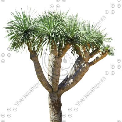 Palm_38.tga