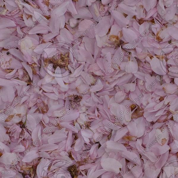 G374 cherry blossom petals
