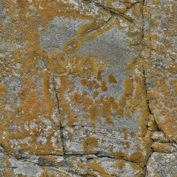RS096 mossy stone rock lichen