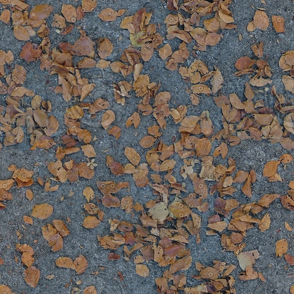 G361 tarmac sidewalk leaves