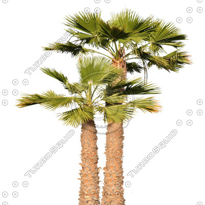 Palm_15.tga