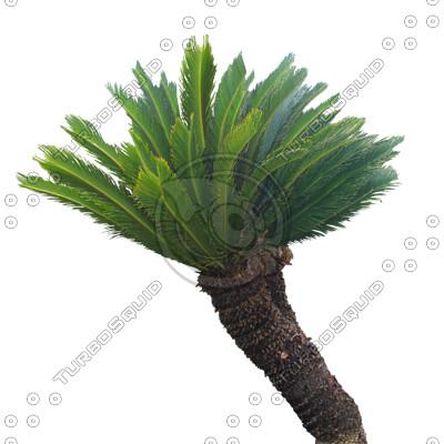 Palm_N_05.tga