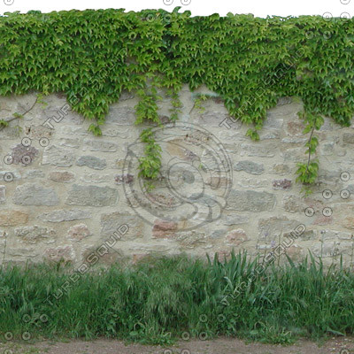 Stone wall with vine.jpg