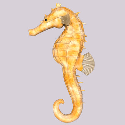 maya sea horse