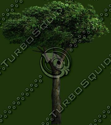tree_08.tga