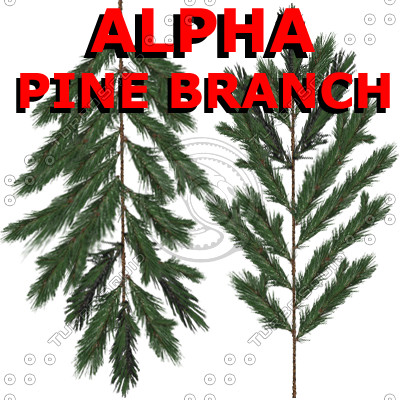 Alpha Channel Pine Tree Branch