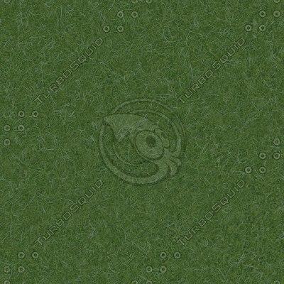 G052 grass lawn texture