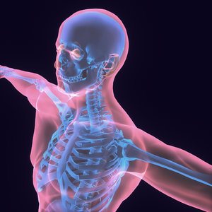Human Body (Male)