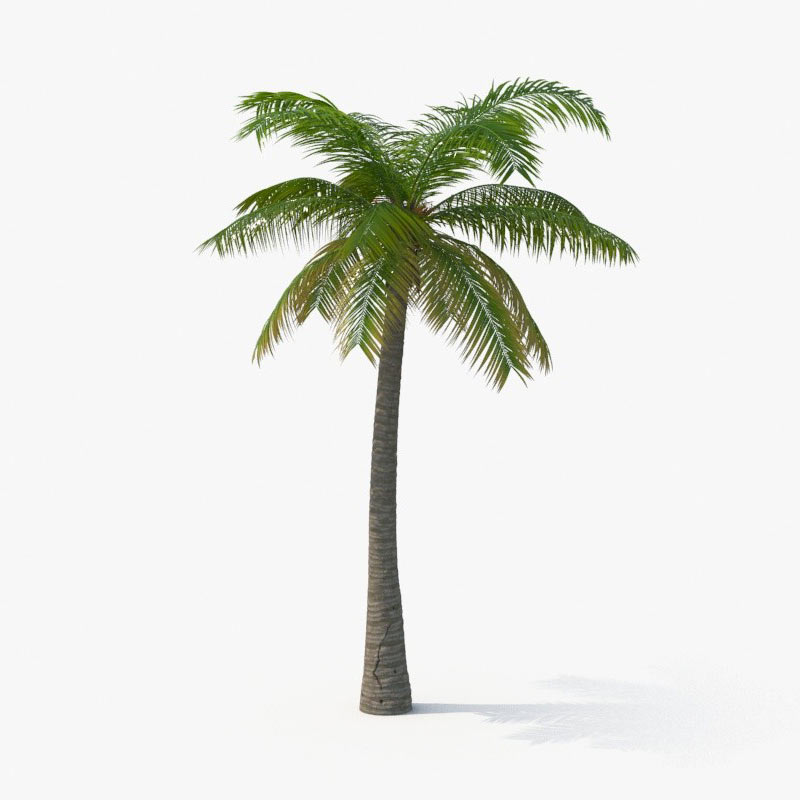 palm tree 3d model by royalmix